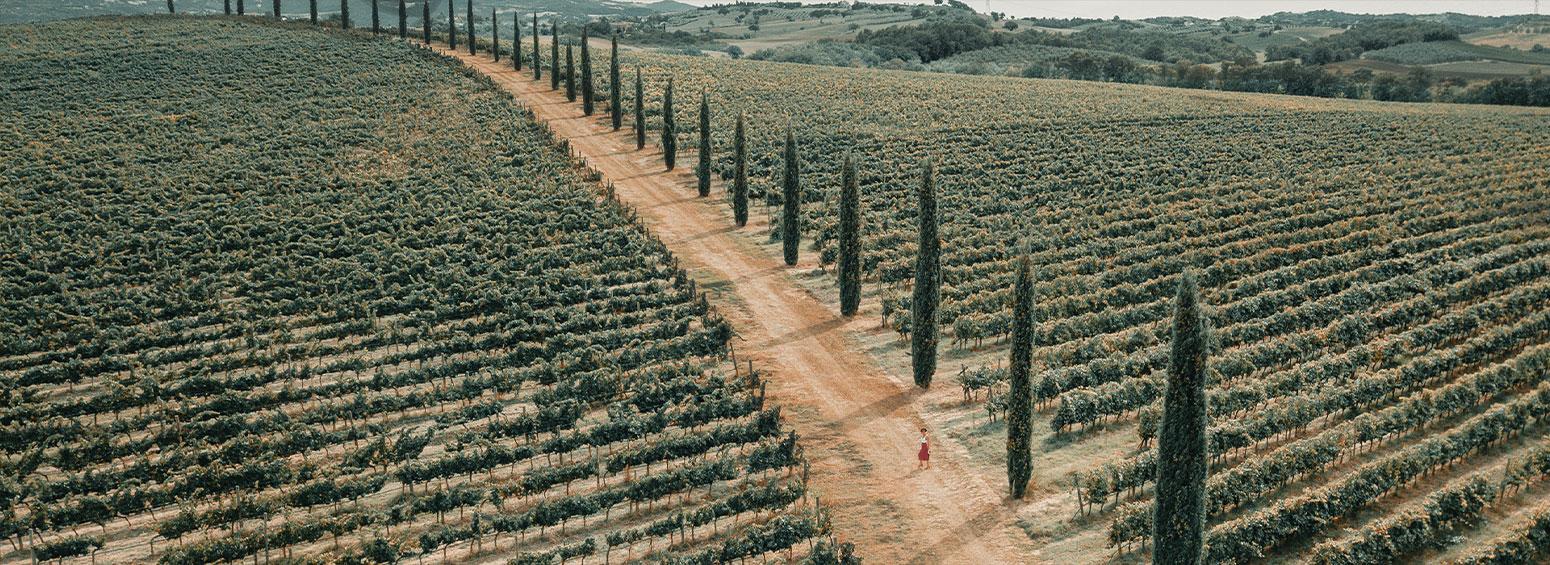 Selection de vin Italiens
